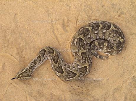 reptileの写真素材 [FYI00835603]