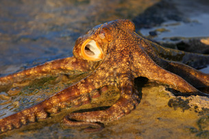 fishes_crustaceansの写真素材 [FYI00835622]