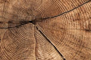 section tree trunkの素材 [FYI00835651]