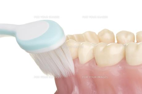 oral hygieneの素材 [FYI00835662]