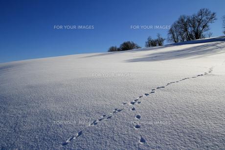 winterの写真素材 [FYI00835674]