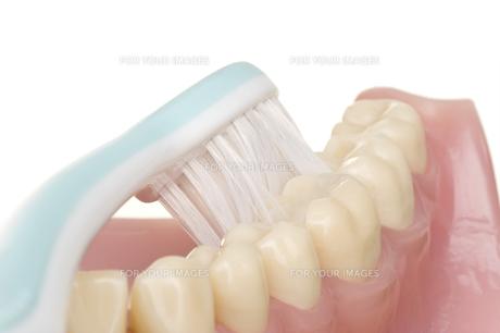 oral hygieneの素材 [FYI00835679]