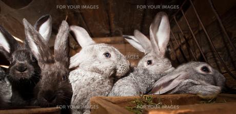 useful_animalsの写真素材 [FYI00835849]