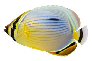 fishes_crustaceansの写真素材 [FYI00836196]