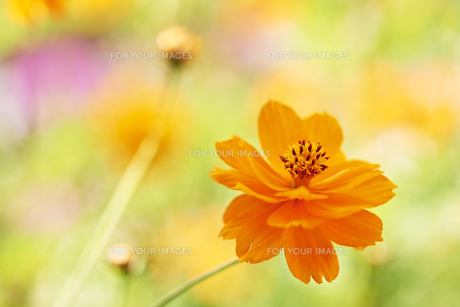 plants_flowersの素材 [FYI00837073]