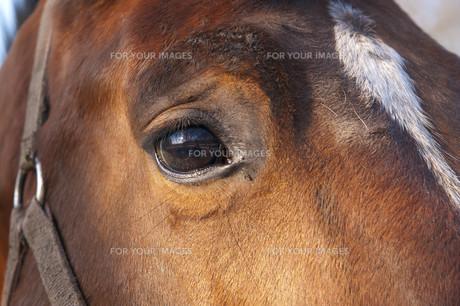 useful_animalsの写真素材 [FYI00837287]