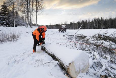 winterの写真素材 [FYI00837446]