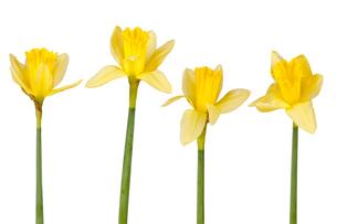 bloomの写真素材 [FYI00837814]