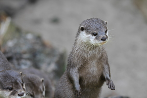 mammalsの写真素材 [FYI00837818]
