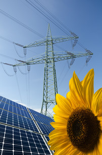 solar panels,sunflower and utility pole with wiresの写真素材 [FYI00837899]