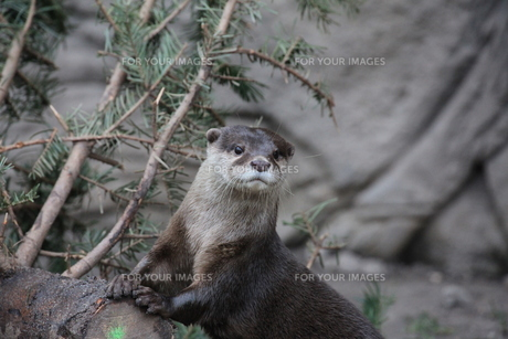 mammalsの写真素材 [FYI00837966]
