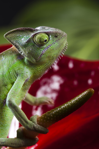 reptiles_amphibiansの写真素材 [FYI00838016]