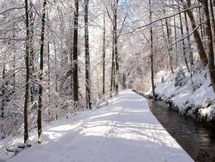 winterの写真素材 [FYI00838036]