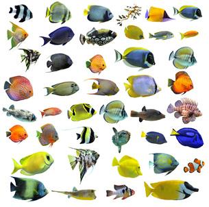 fishes_crustaceansの写真素材 [FYI00838068]