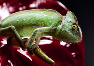 reptiles_amphibiansの写真素材 [FYI00838078]