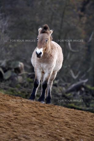 horseの素材 [FYI00838079]