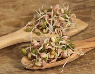 germinating mung beansの素材 [FYI00838104]