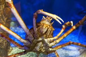 fishes_crustaceansの写真素材 [FYI00838644]