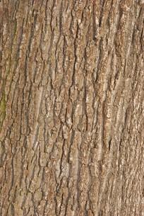 barkの写真素材 [FYI00838646]
