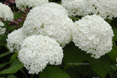 plants_flowersの素材 [FYI00838671]