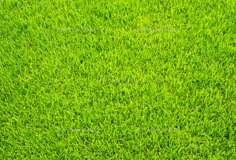 fussballrasen - soccer grassの写真素材 [FYI00838908]