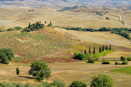 podere in fall - podere in fall 20の写真素材 [FYI00838911]