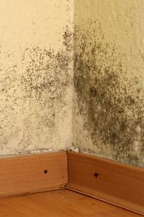mold in corner of roomの写真素材 [FYI00838925]