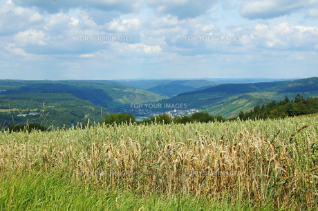 overlooking the moselle valleyの写真素材 [FYI00838937]