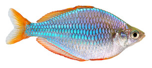 fishes_crustaceansの写真素材 [FYI00838987]