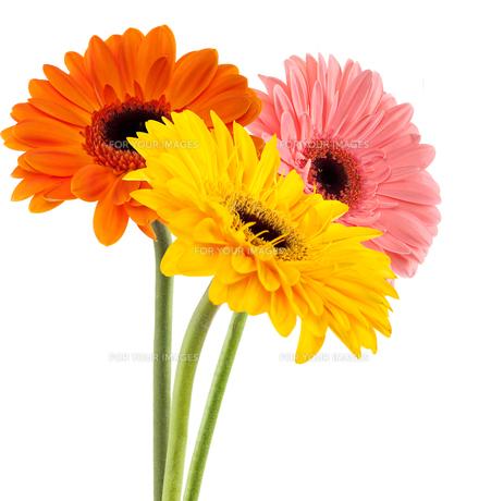 plants_flowersの写真素材 [FYI00839051]
