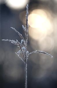 winterの写真素材 [FYI00839084]