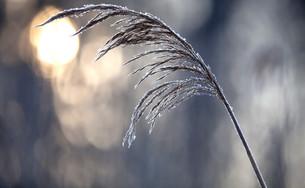 winterの写真素材 [FYI00839089]