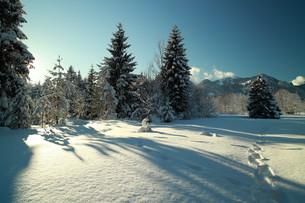 winter in bayernの写真素材 [FYI00839128]