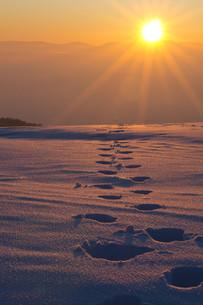 towards the sunの写真素材 [FYI00839283]
