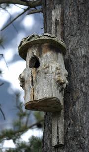 bird houseの写真素材 [FYI00839407]