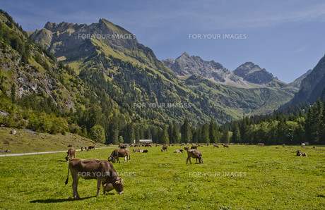 the good alpe with schneck and himmelhorn in oytalの写真素材 [FYI00839485]