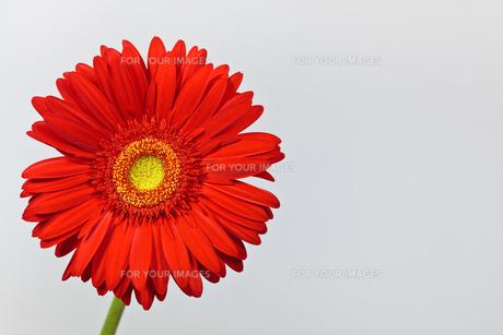 plants_flowersの写真素材 [FYI00839565]