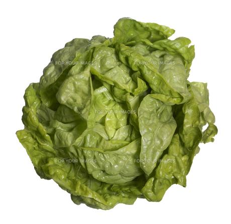 fresh head of lettuceの写真素材 [FYI00839814]