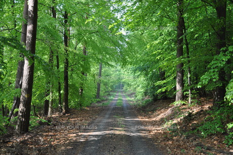forest pathの素材 [FYI00840263]