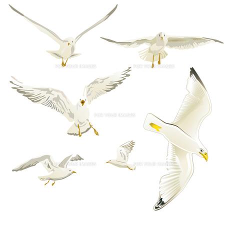 seagullsの素材 [FYI00840432]