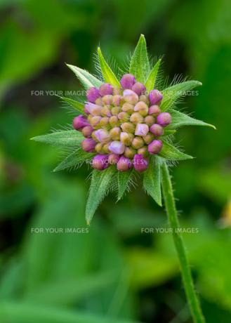 plants_flowersの素材 [FYI00841038]