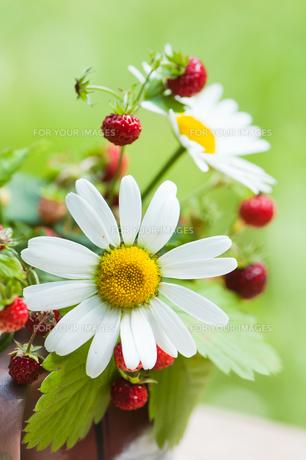 bloomの写真素材 [FYI00841062]