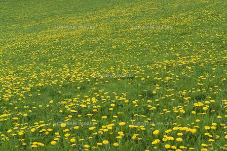 bloomの写真素材 [FYI00841136]