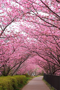 bloomの写真素材 [FYI00841222]