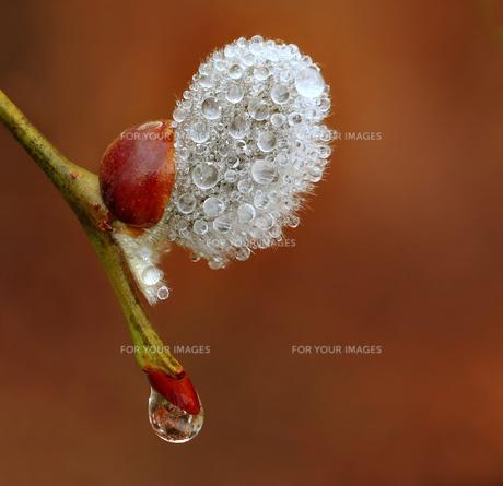 bloomの写真素材 [FYI00841574]