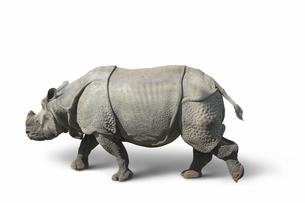 rhinoceros in white backの写真素材 [FYI00841745]