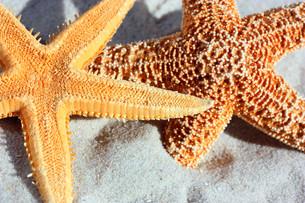 starfish in the sandの写真素材 [FYI00842049]