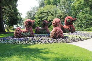 ducks of flowersの素材 [FYI00842069]