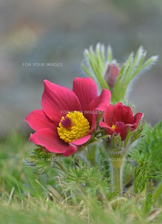 plants_flowersの素材 [FYI00842231]