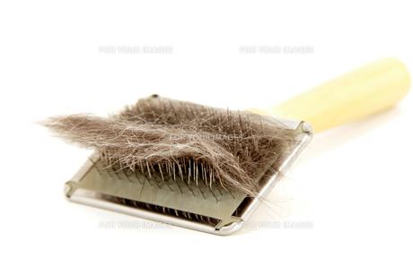 cat hairの素材 [FYI00842289]
